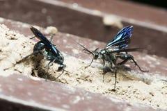 Пчела, пчела красивая Стоковое Изображение