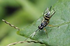 Пчела, пчела красивая Стоковые Изображения RF