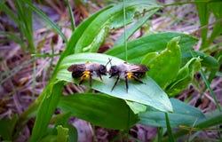 Пчела & пчела Стоковая Фотография