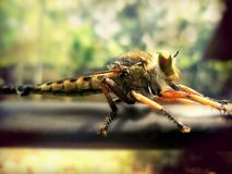 Пчела дракона Стоковые Фотографии RF