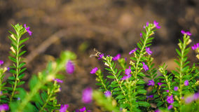 пчела смотря нектар стоковая фотография rf