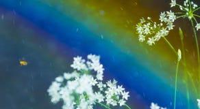 Пчела цветка радуги дождя Стоковые Фотографии RF
