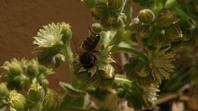Пчела Стоковые Изображения