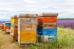 Пчела hives на полях лаванды, около Valensole, Провансаль стоковые фотографии rf