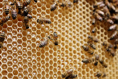 Пчеловодство в Казахстане Стоковые Изображения RF
