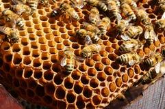 Пчеловодство на Вьетнаме, улье, меде пчелы Стоковая Фотография