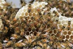 Пчеловодство на Вьетнаме Стоковые Изображения