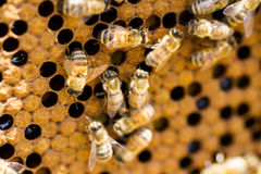 Пчеловодство Стоковое фото RF