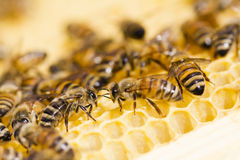 Пчеловодство Стоковое Фото