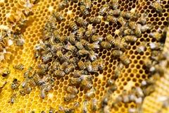 Пчеловодство Стоковая Фотография RF