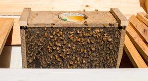 Пчелы в коробке Стоковое Изображение