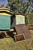 Пчелы в крапивницах Стоковая Фотография