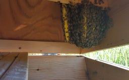 Пчелы в крапивнице Стоковое Изображение RF