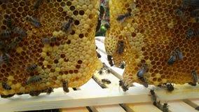 Пчелы в крапивнице стоковое фото rf
