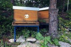 Пчелы летая в деревянную крапивницу на солнечный день Стоковое Изображение RF