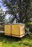 Пчелы летая в деревянную крапивницу на солнечный день Стоковое фото RF
