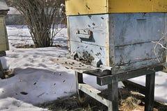 Пчелы летая в зиму Стоковое фото RF