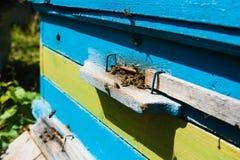 Пчелы летая к доскам посадки Стоковая Фотография RF