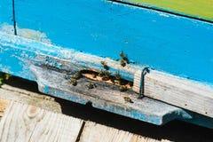 Пчелы летая к доскам посадки Стоковое фото RF