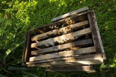 Пчелы летая от открытой крапивницы в дне Вьетнама солнечном Стоковые Фотографии RF
