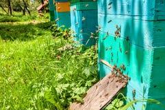Пчелы летая для того чтобы hive Стоковое фото RF