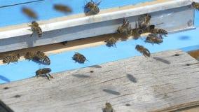 Пчелы летели в крапивницу с медом видеоматериал