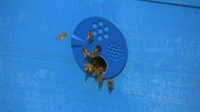 Пчелы летели в крапивницу с медом акции видеоматериалы