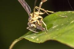 Пчелы едят насекомое Стоковое фото RF