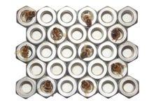 Пчелы и гайки шестиугольника Стоковые Изображения RF