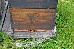 Пчелы и крапивница меда Стоковое Фото