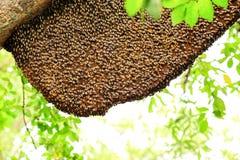 Пчелы и сот на дереве Стоковые Фотографии RF
