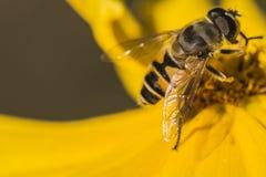 Пчелы и цветки Стоковые Изображения RF