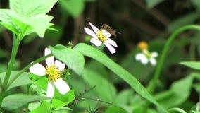 Пчелы и цветки акции видеоматериалы