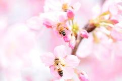 Пчелы и цветок Стоковые Фотографии RF