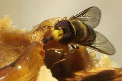 Пчелы, которые приходят от суровой зимы Стоковое Изображение