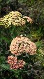 пчелы многодельные Стоковые Фото