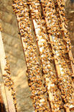 Пчелы на крапивнице Стоковое Изображение RF