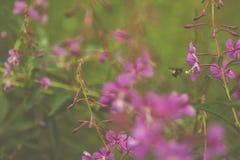 Пчелы на охоте стоковые фото