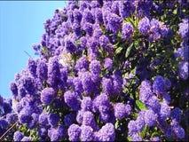 Пчелы на цветении с песней птицы сток-видео