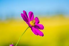 Пчелы на цветке Стоковое Изображение