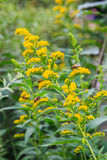 Пчелы на цветке Стоковые Фото