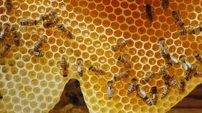 Пчелы обрабатываемый нектар к меду На сотах с медом Стоковая Фотография RF