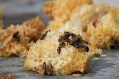 Пчелы работая на клетках меда Стоковая Фотография RF