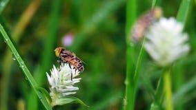 Пчелы с цветками в траве стоковые изображения rf