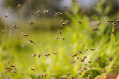 Пчелы танцев стоковое фото rf