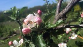 Пчелы темы видеоматериал