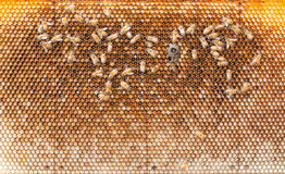Пчелы Стоковые Изображения