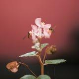 Пчелы & folwer Стоковые Изображения RF