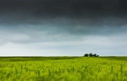 пшеница валов поля Стоковые Изображения