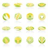 пшеница вектора шаблона рожи логоса установленная Стоковое Изображение RF